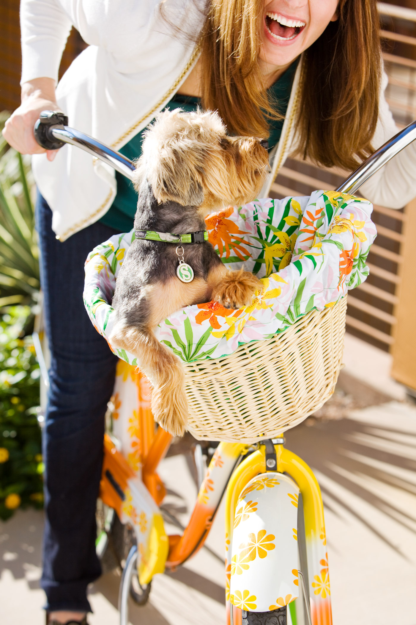 Puppy in a Bike Basket